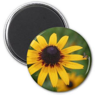 Bug On Black Eyed Susan Flower Photo Magnet