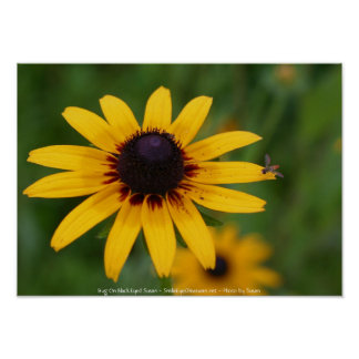 Bug On Black Eyed Susan Flower Photography Poster