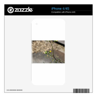 Bug on Flower Skins For iPhone 4S