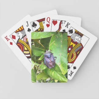 Bug Playing Cards