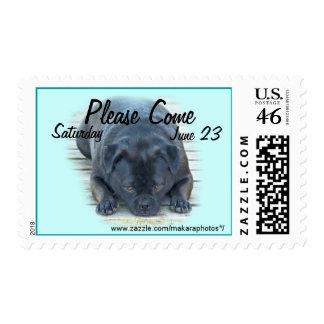 Bug-Puppy, Susie 2263 Stamp- customize