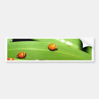 bug  spot ladybird bumper sticker