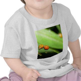 bug  spot ladybird t-shirt