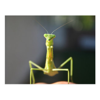 Bug You Postcard