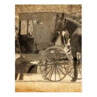 Buggy Before The Horse, Amish Bring Home New Horse Postcard