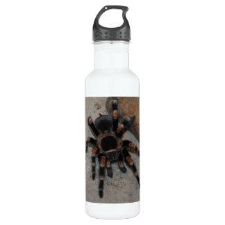 Buggy Spider Bottle
