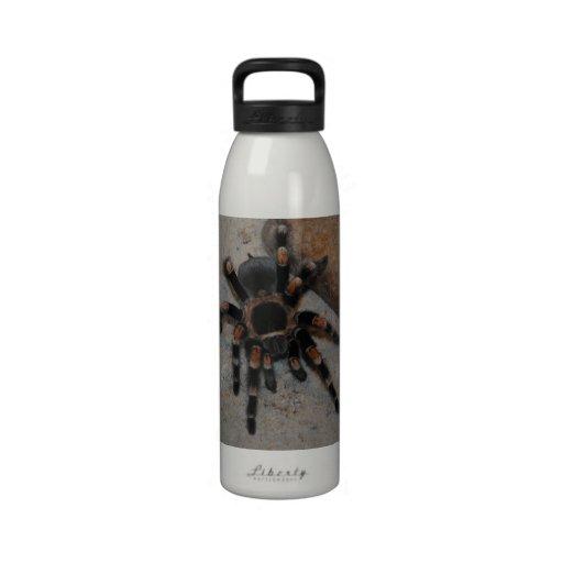 Buggy Spider Bottle Water Bottle