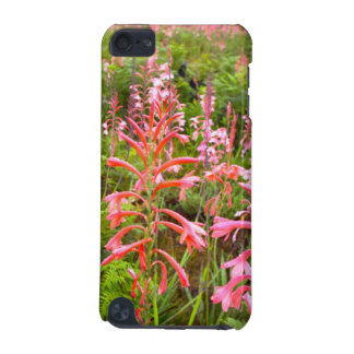 Bugle Lily (Watsonia) Flower, Eastern Cape iPod Touch 5G Cases