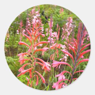 Bugle Lily (Watsonia) Flower, Eastern Cape Classic Round Sticker