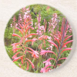 Bugle Lily Watsonia Flower Eastern Cape Beverage Coasters