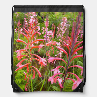 Bugle Lily (Watsonia) Flower, Eastern Cape Drawstring Bag