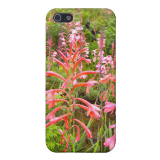 Bugle Lily (Watsonia) Flower, Eastern Cape iPhone SE/5/5s Cover