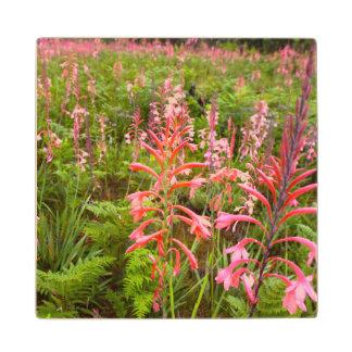 Bugle Lily Watsonia Flower Eastern Cape Maple Wood Coaster