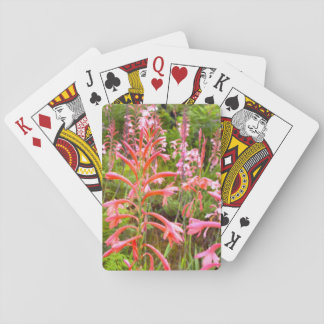 Bugle Lily (Watsonia) Flower, Eastern Cape Playing Cards