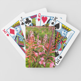 Bugle Lily Watsonia Flower Eastern Cape Card Decks