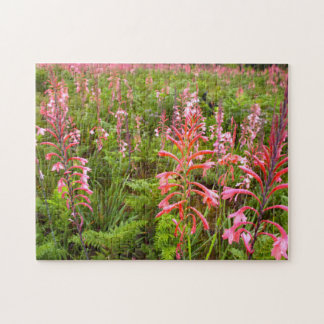 Bugle Lily Watsonia Flower Eastern Cape Puzzle