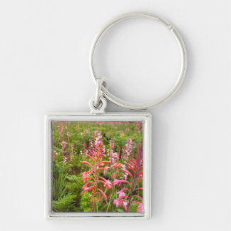 Bugle Lily (Watsonia) Flower, Eastern Cape Silver-Colored Square Keychain