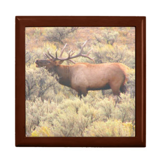 Bugling Bull Elk in Sagebrush Keepsake Box