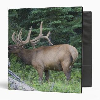 Bugling elk in Banff National Park, Canada. Vinyl Binders