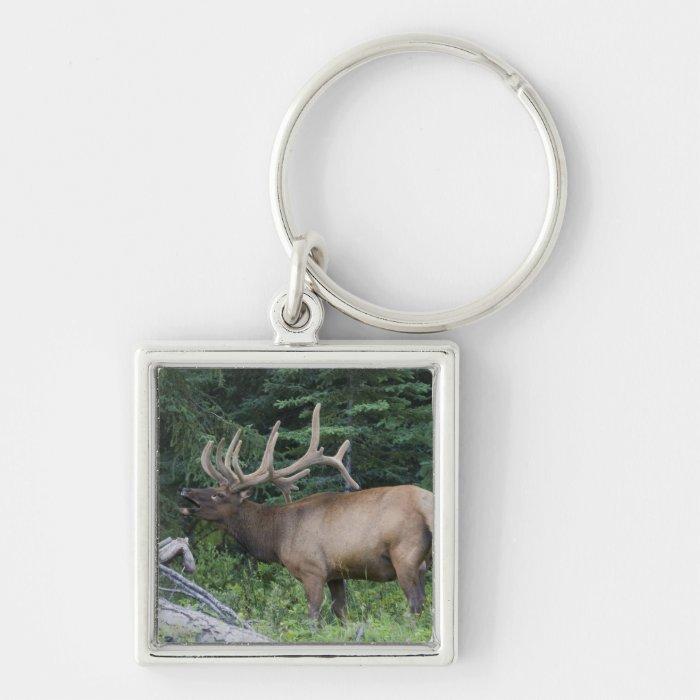Bugling elk in Banff National Park, Canada. Keychain