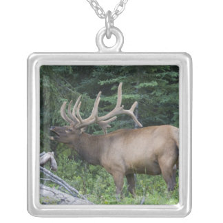 Bugling elk in Banff National Park, Canada. Silver Plated Necklace