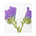 Bugloss púrpura de las víboras (plantagineum del e blocs de papel