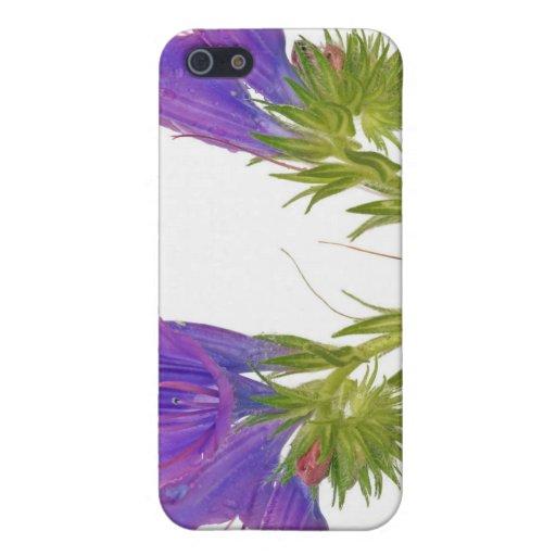 Bugloss púrpura de las víboras (plantagineum del e iPhone 5 fundas