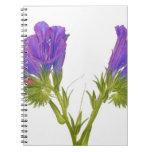 Bugloss púrpura de las víboras (plantagineum del e libro de apuntes con espiral