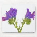 Bugloss púrpura de las víboras (plantagineum del e mousepad
