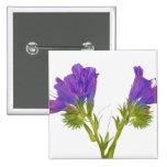 Bugloss púrpura de las víboras (plantagineum del e pin cuadrado