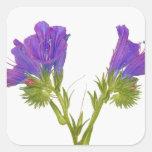 Bugloss púrpura de las víboras (plantagineum del calcomanía cuadradas