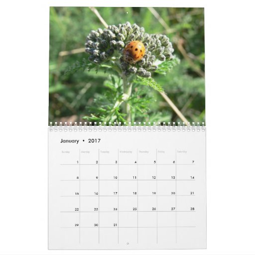 Bugs and Blossoms 2011 Calendar