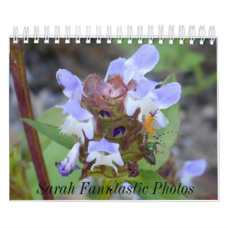 Bugs and Flowers Calendar