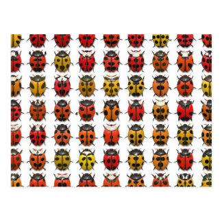 Bugs, Bugs, Bugs - Bugs Pattern Post Card