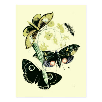 Bugs & Flying Insects Photo Design Postcard