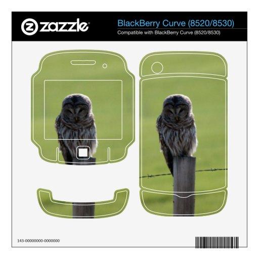 Búho barrado de BAOW BlackBerry Calcomanías