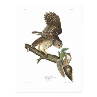 Búho barrado de la placa 46 de Audubon Postales