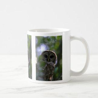 Búho barrado, marismas, la Florida Taza De Café