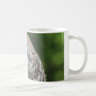 Búho barrado taza de café