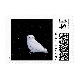 búho blanco en espacio sellos
