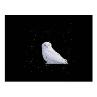 búho blanco en espacio postales