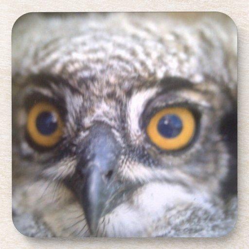 búho de águila manchado posavaso