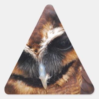 Búho de Brown Pegatina Triangular