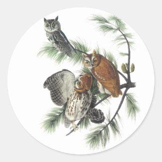 Búho de chillido del este Juan Audubon Pegatinas