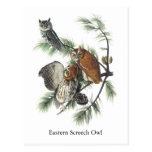 Búho de chillido del este, Juan Audubon Postales