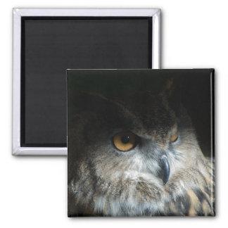 Búho de Eagle del eurasiático Imanes De Nevera