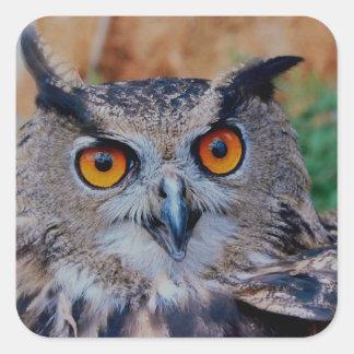 Búho de Eagle del eurasiático Pegatina Cuadradas Personalizada