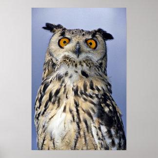 Búho de Eagle Poster