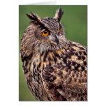 Búho de Eagle - tarjeta de felicitación en blanco