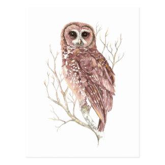 Búho de encargo de la acuarela, pájaro, naturaleza tarjeta postal
